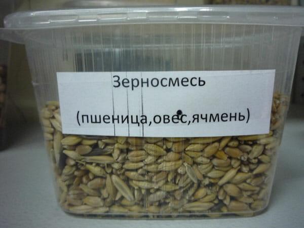 Зерносмесь (пшеница, овес, ячмень) Оптовая база, склад-магазин «Трион» г. Нягань